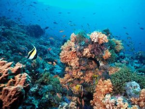 karang 1