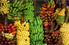 pisang lokal