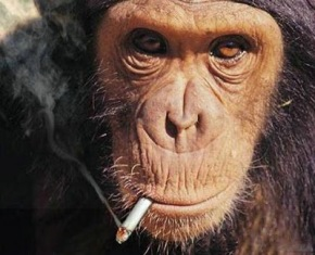 Smoking_Monkeys