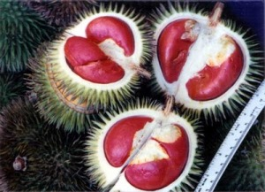 red-durian2